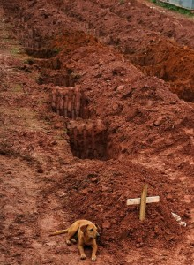 Leao sits at the grave of his owner who died from a landslide near Rio de Janiero.