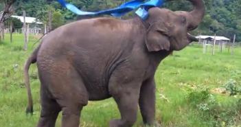 elephant_001