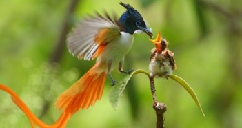 bird.paradise